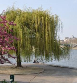 Partageons nos jardins secrets parisiens
