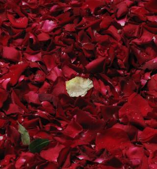 Saint-Valentin, fête de l'amour et restaurants romantiques